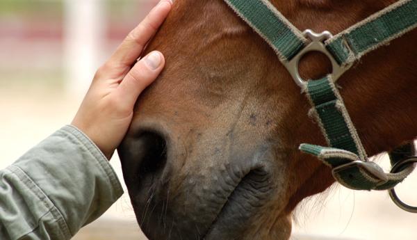 1° CLINIC DI HORSE HANDLER